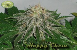 Happy Chem LTD