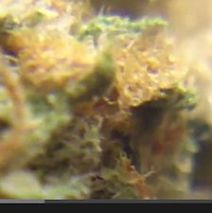 Dominator Weed Review by Somaweedlove