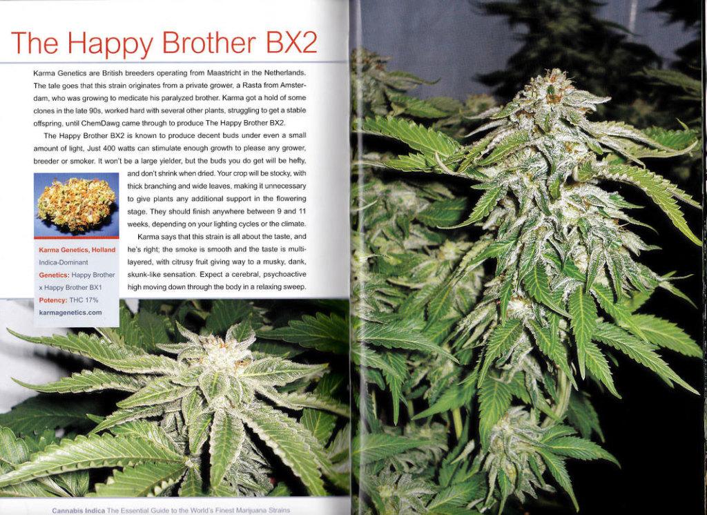 HBStrainBook