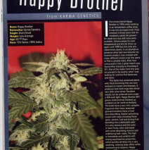 "Skunk Magazine's ""Hot MILFS Unfuckable Strains"" Happy Brother Article"